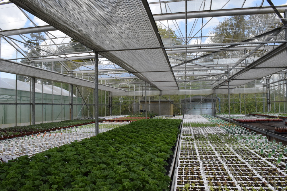 Staverton Nursery Sussex Grown Plants