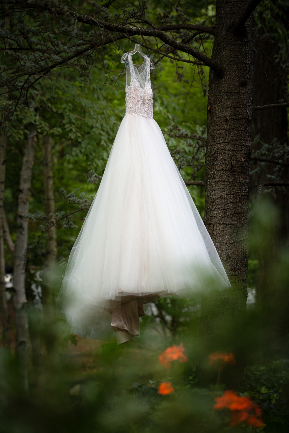 Photo of wedding dress hanging in a tree