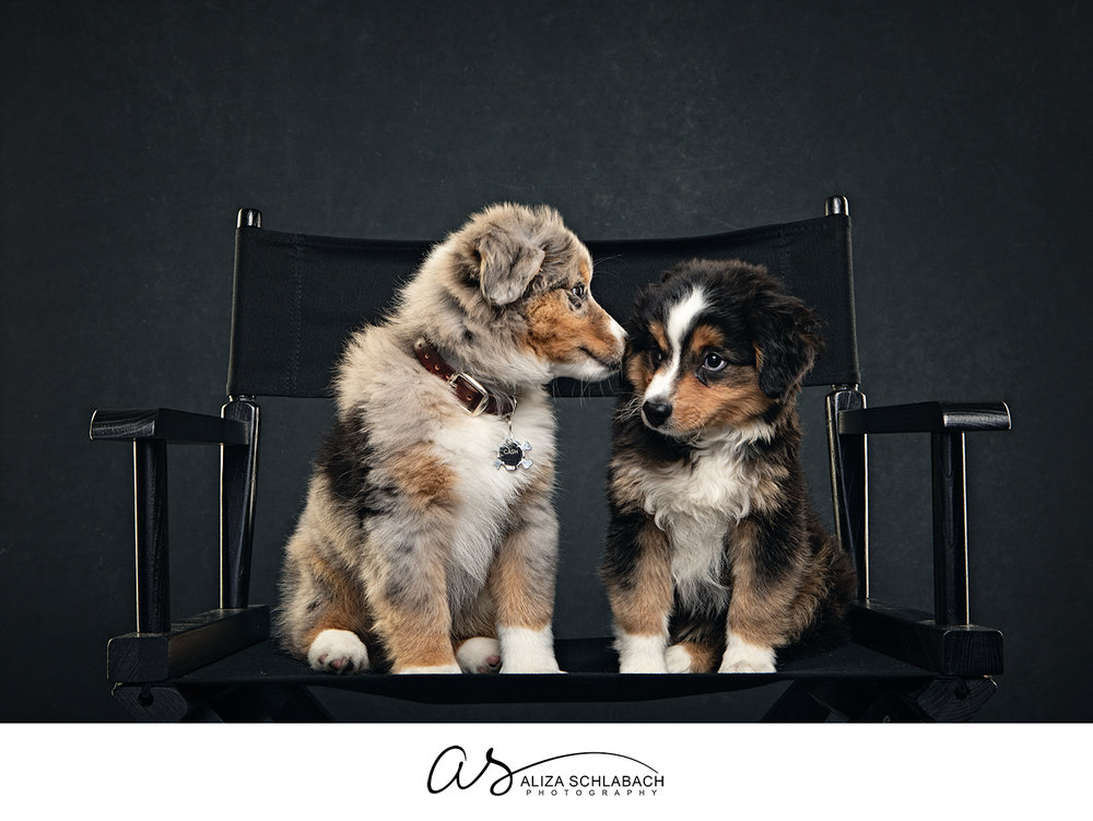 Photo of 2 puppies on a director chair