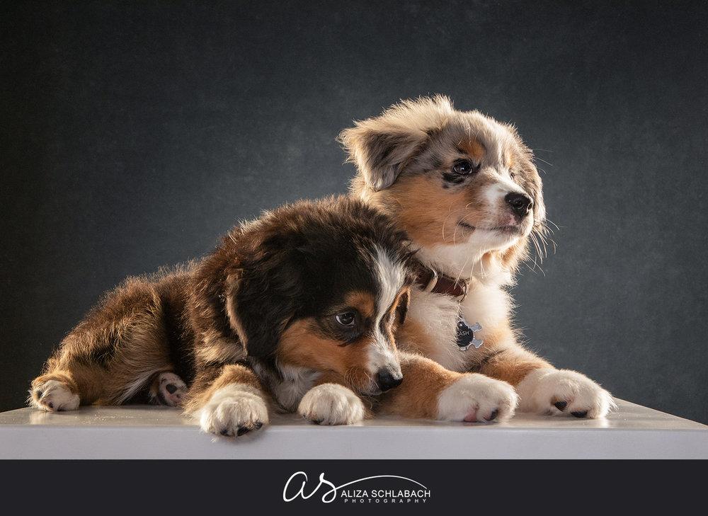 Portrait of 2 puppies
