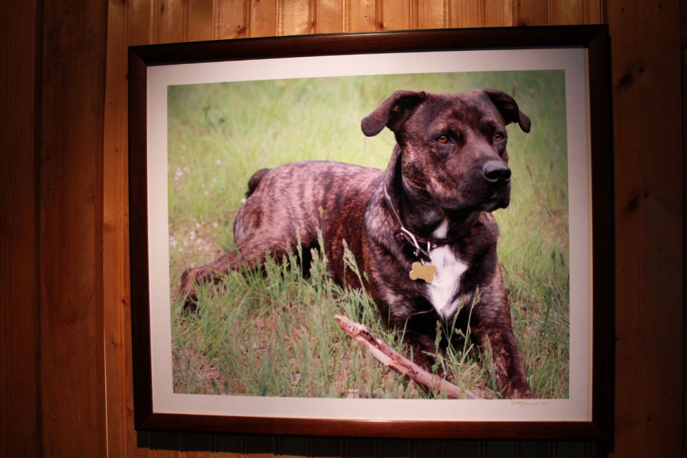 Helm's dog, Muddy, in a framed picture hanging downstairs from Helm's barn studio.