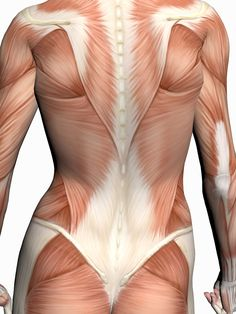 Fascia runs through our entire body. Source: Pinterest