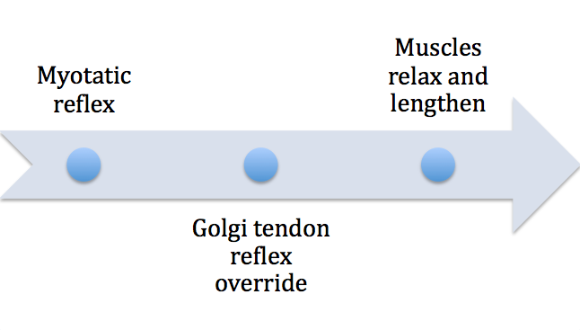 Only when Golgi tendon reflex kicks in can static stretch lengthen muscles