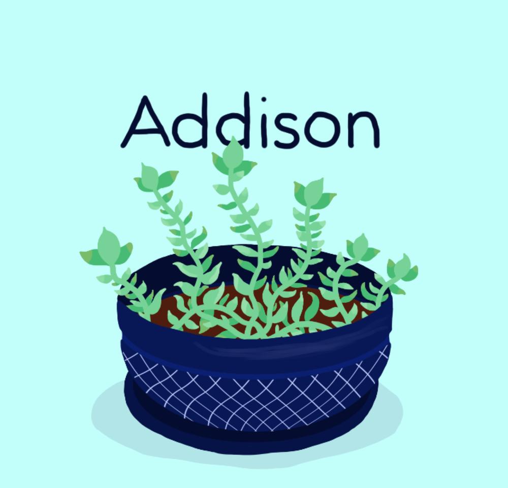 Tory-Woollcott-Plants Addison.png
