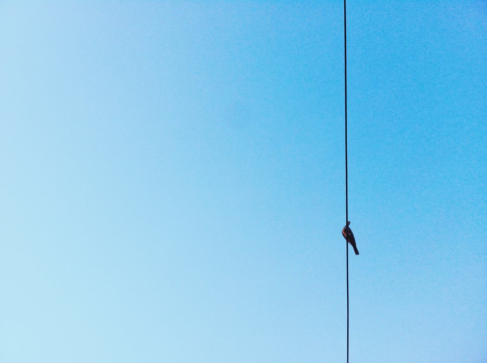 Bird on Wire_MCML - XXXIII (steal my__art)_StockSnap.jpg