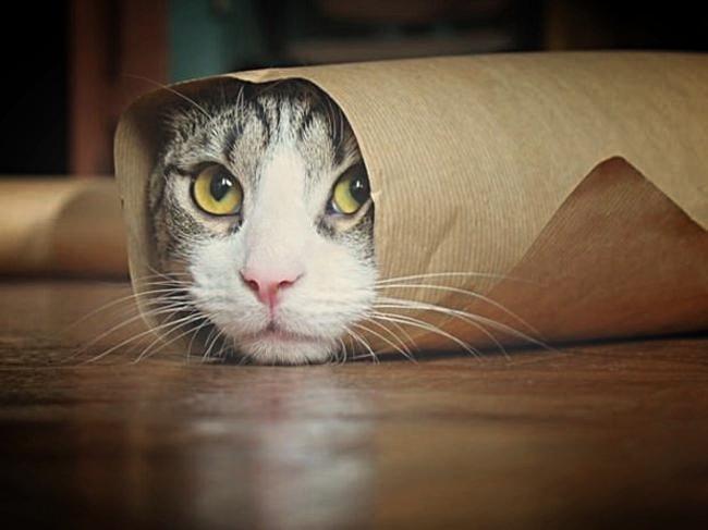 burritoCat