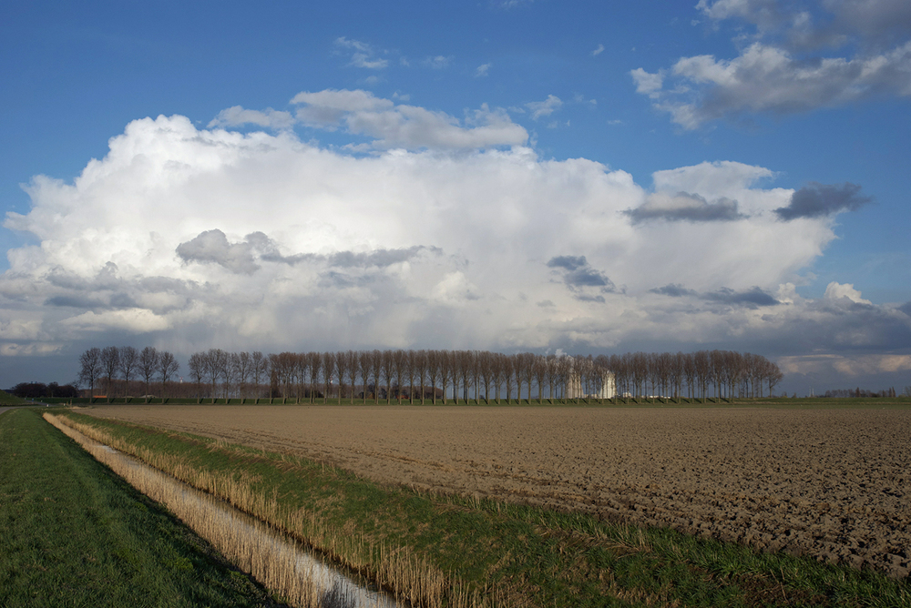 Image by:Bart Van Damme- Hedwigepolder, Zeeland, Netherlands.