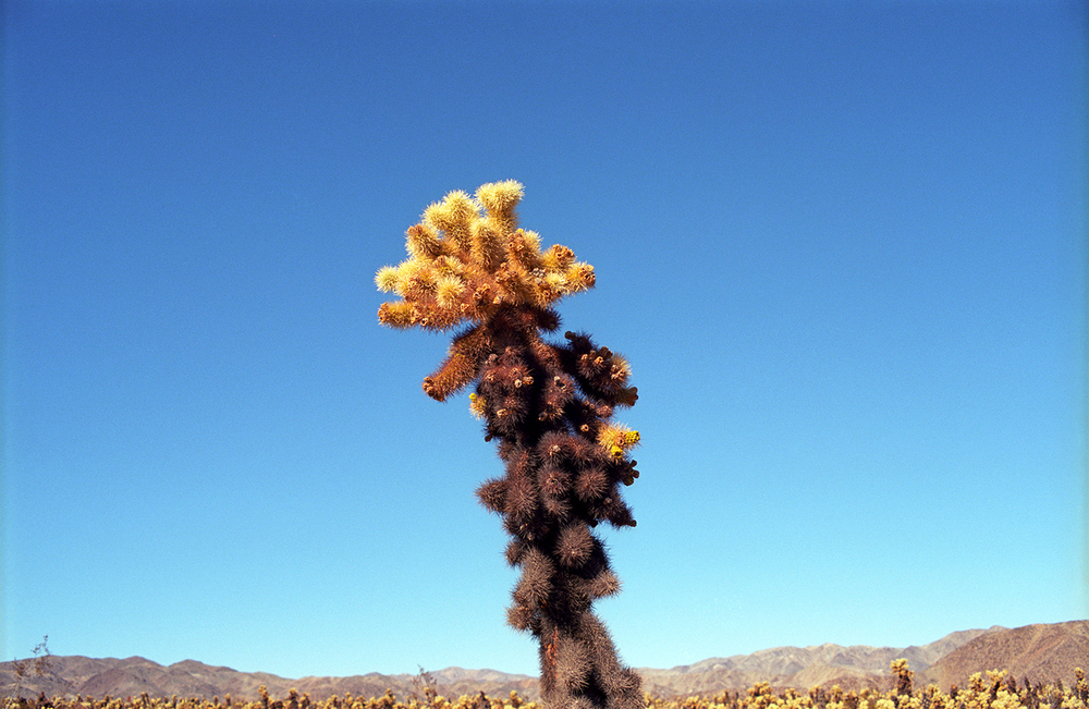 Untitled-(Joshua-Tree-CA),-2014.jpg