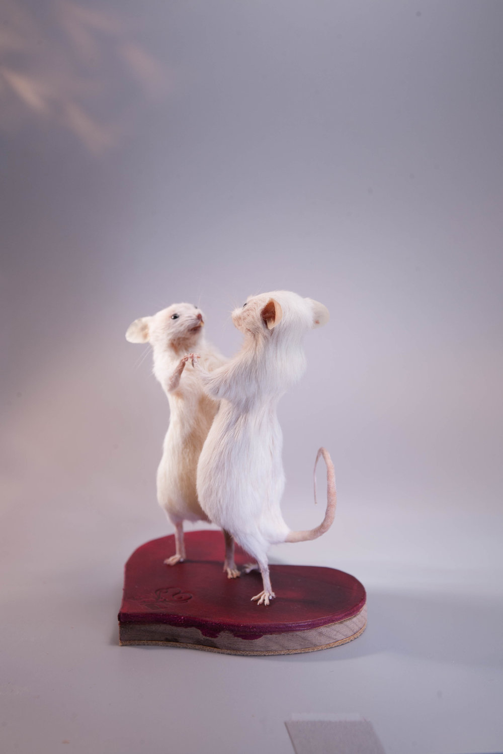 Taxidermy Mouse Tiny Dancers