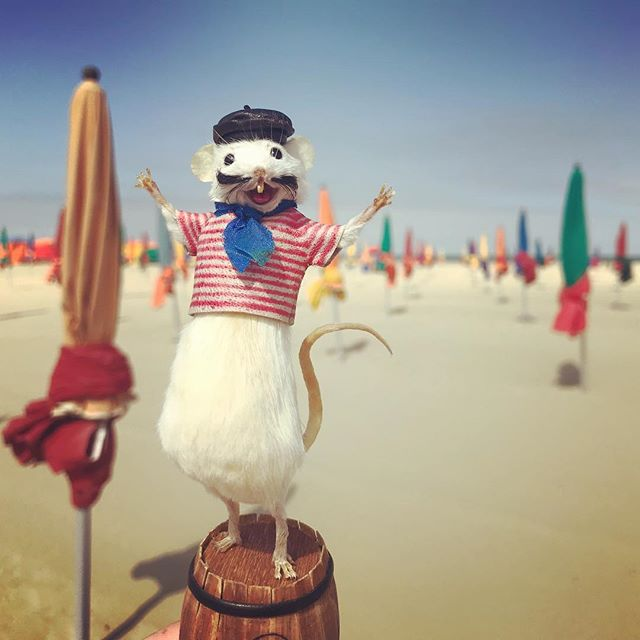 @henrisouris sur les Planches de Deauville #taxidermy #mouse #deauville #parasols #beach #normandie