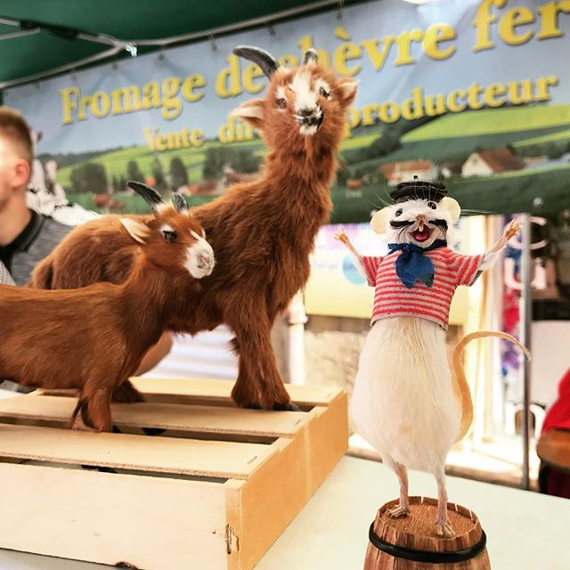 @henrisouris found new friends at the Saint Cyprien farmers market #dordogne #perigord #taxidermy #mouse #goat #cheese #farmersmarket #tinygoats #france #tourist