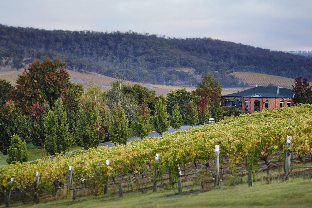 De Bortoli Wines Yarra Valley Restaurant and Cellar Door.jpg