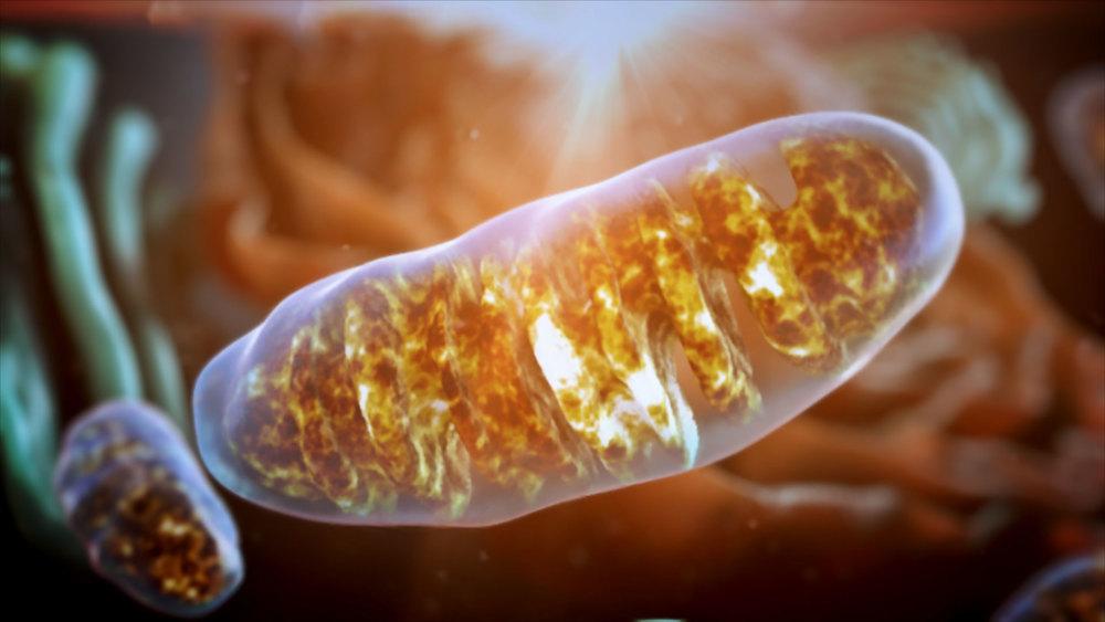 Mitochondria_pushin_HD (0-00-06-14).jpg