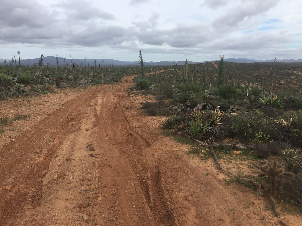 "Every day I think ""this is my favorite section so far."" I'm completely enchanted by the Cirios cacti of Baja, but I'm sure the route will just keep getting better."