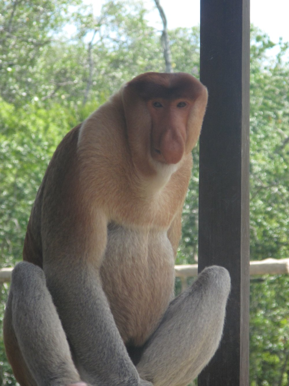 Sepilok, Malaysia
