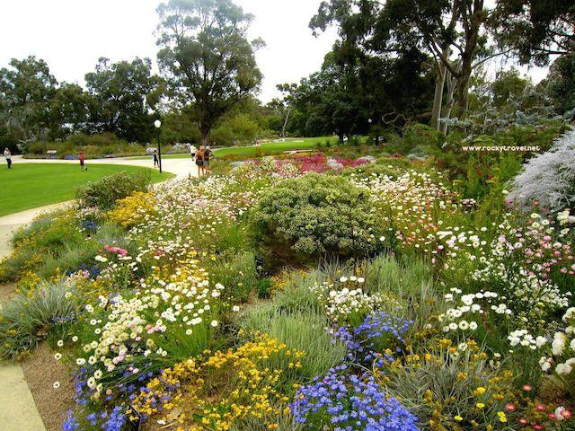 Perth Spring flowers