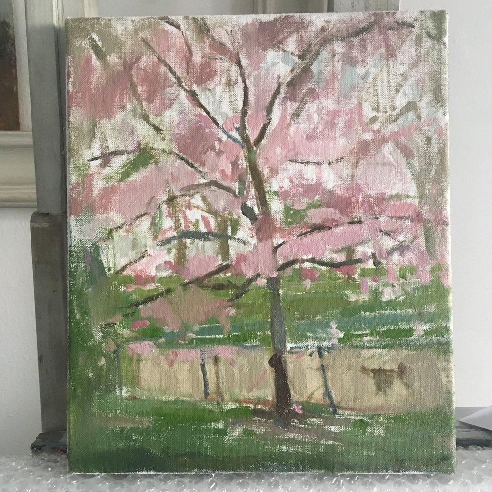 Pink blossom tree, Hyde Park