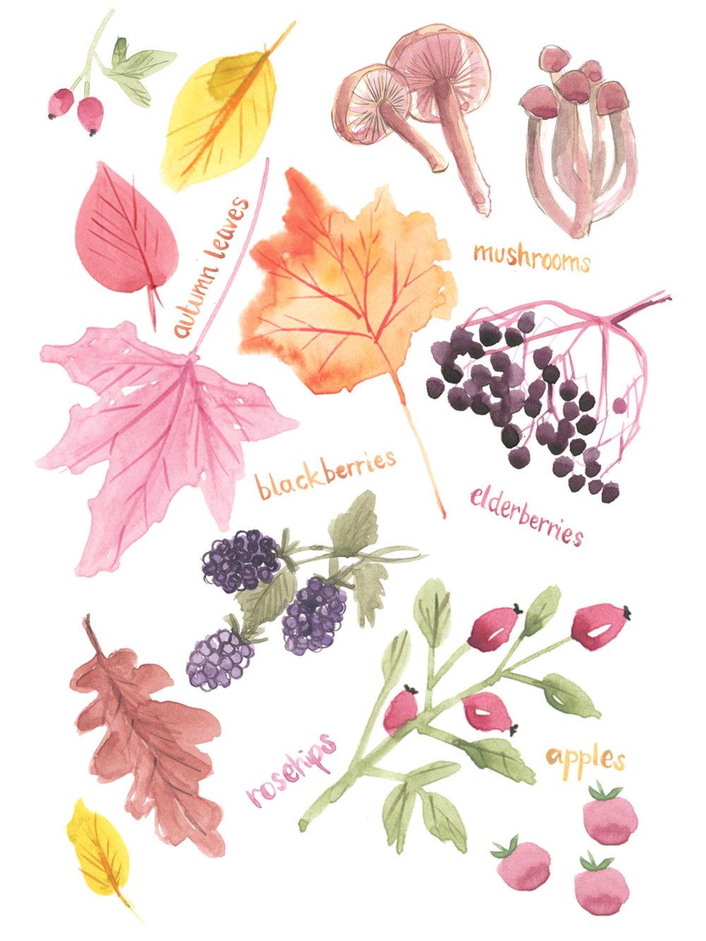 p--website-food-berries.jpg