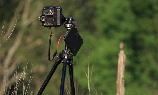 Triggertrap Mobile and an iPad Mini? Perfect for wildlife photography!