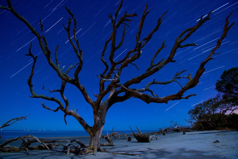 Moonlit Tree Jekyll Island by David Wright