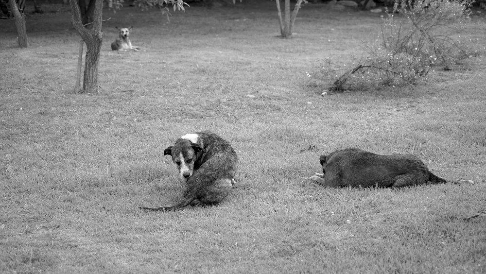 Los perros (25.01.17)