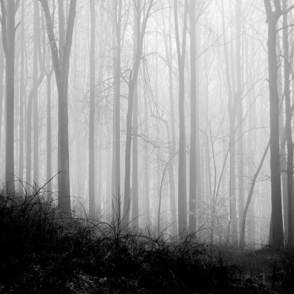 fog_trees.jpg