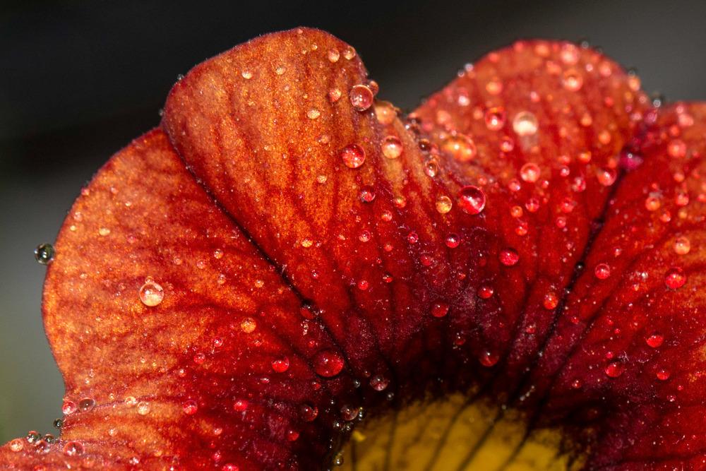 macroflower.jpg