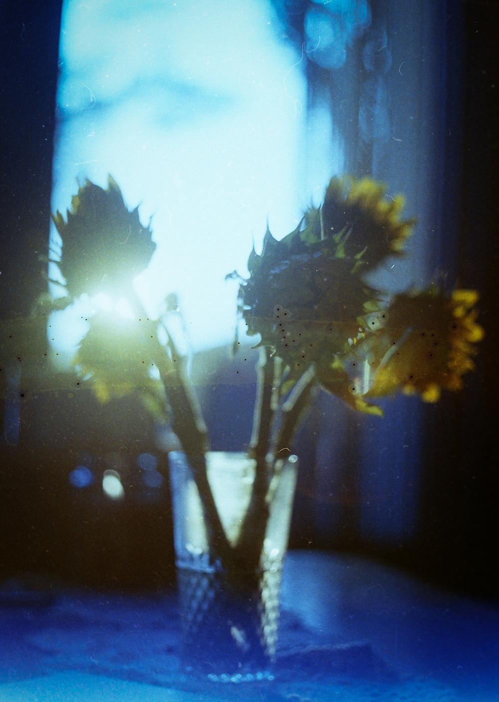 expiredsunflowers.jpg