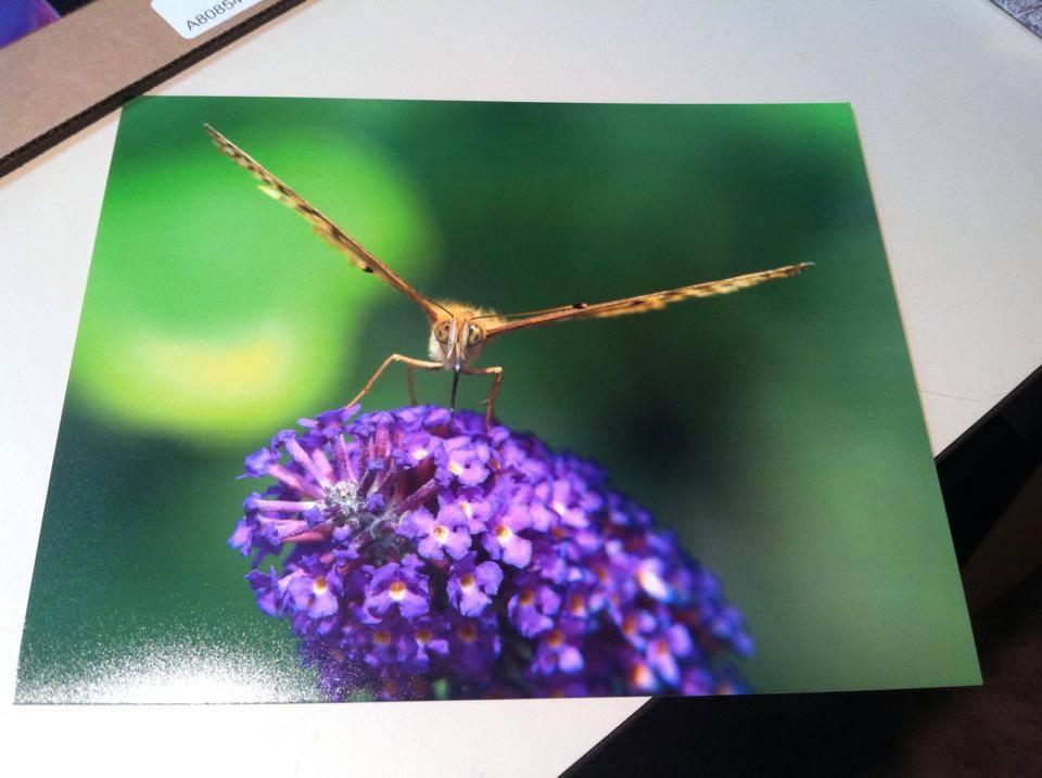Photo print by David Yemm