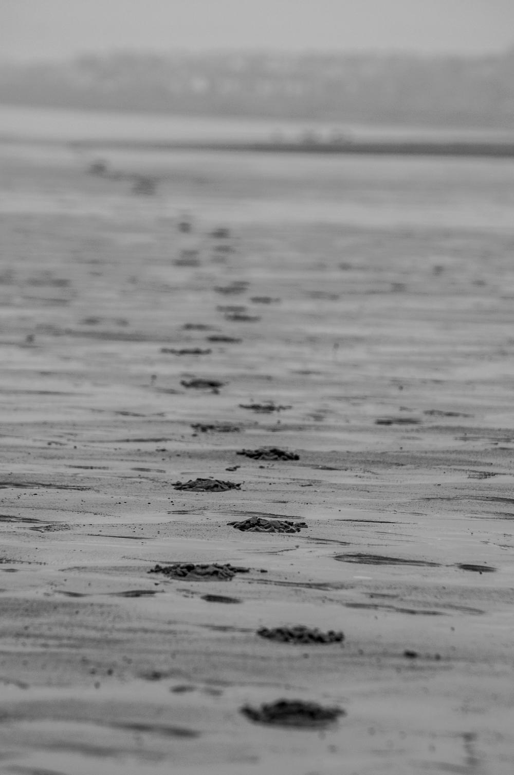 Portobello o wschodzie - DSC_9334.jpg