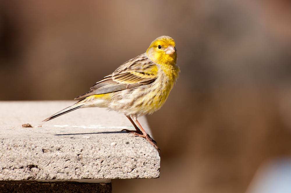 Ptak, Madeira - 150424 - DSC_4003-6.JPG