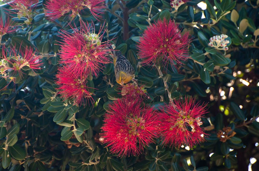 Ptak, Madeira - 150424 - DSC_4041-4.JPG
