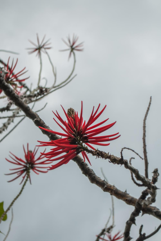 Kwiaty, Madera - 150420 - DSC_4183.JPG