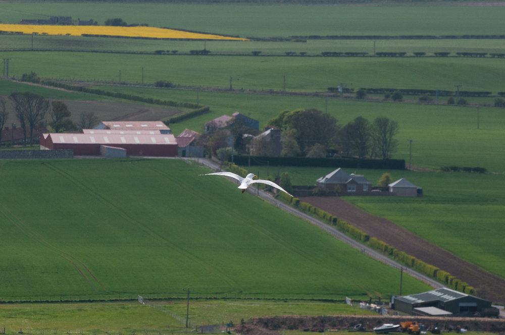 North Berwick-170423-4883.jpg