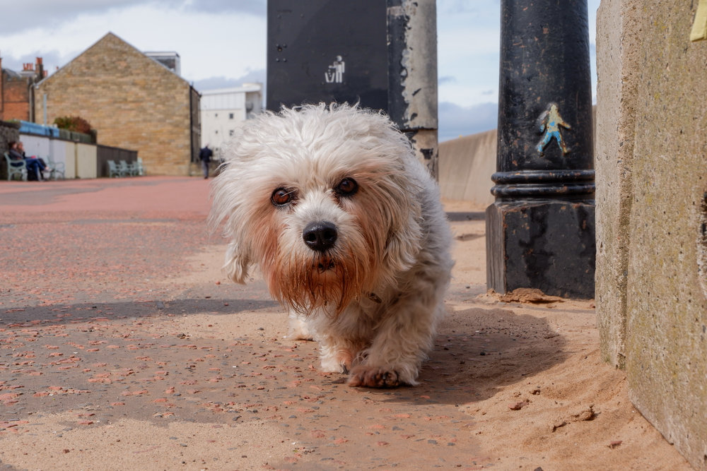Dog on Portobelo - 2018 - DSCF0257.jpg