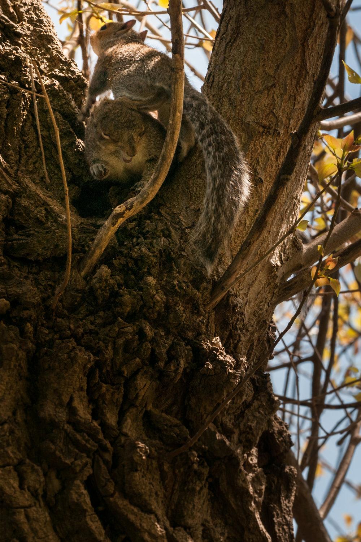 Squirrel - 2018 - MAR_8328.jpg