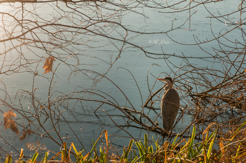 Ptaki lochend park - 2019 - MAR_2566.jpg