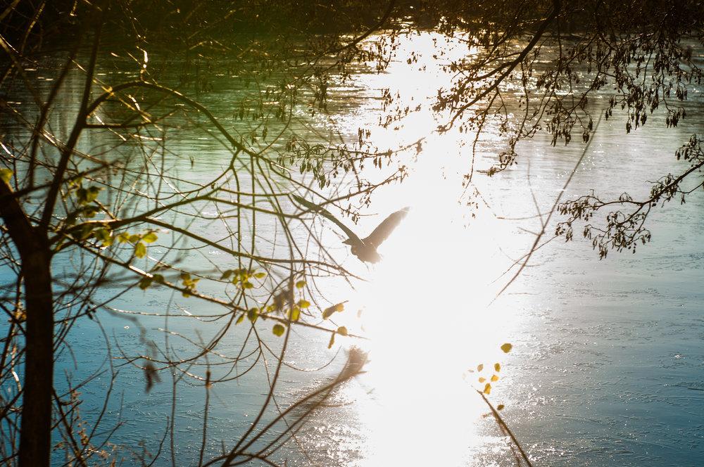 Ptaki lochend park - 2019 - MAR_2575.jpg