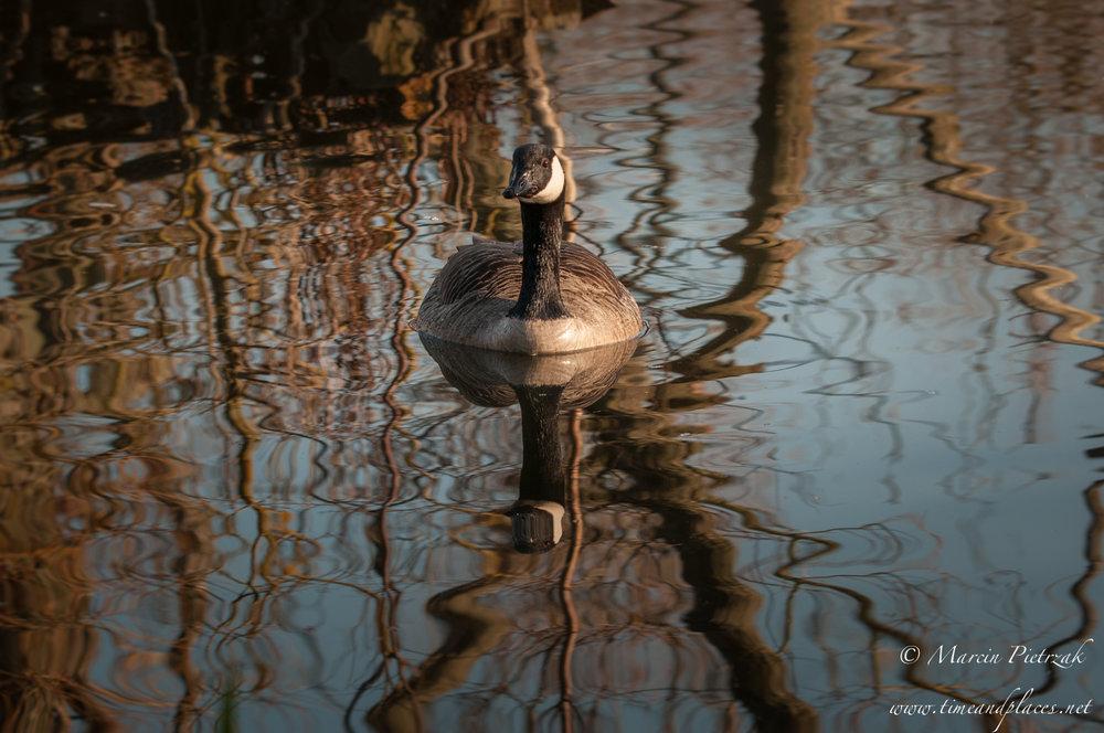netPtaki Lochend Park - 2019 - MAR_4234.jpg