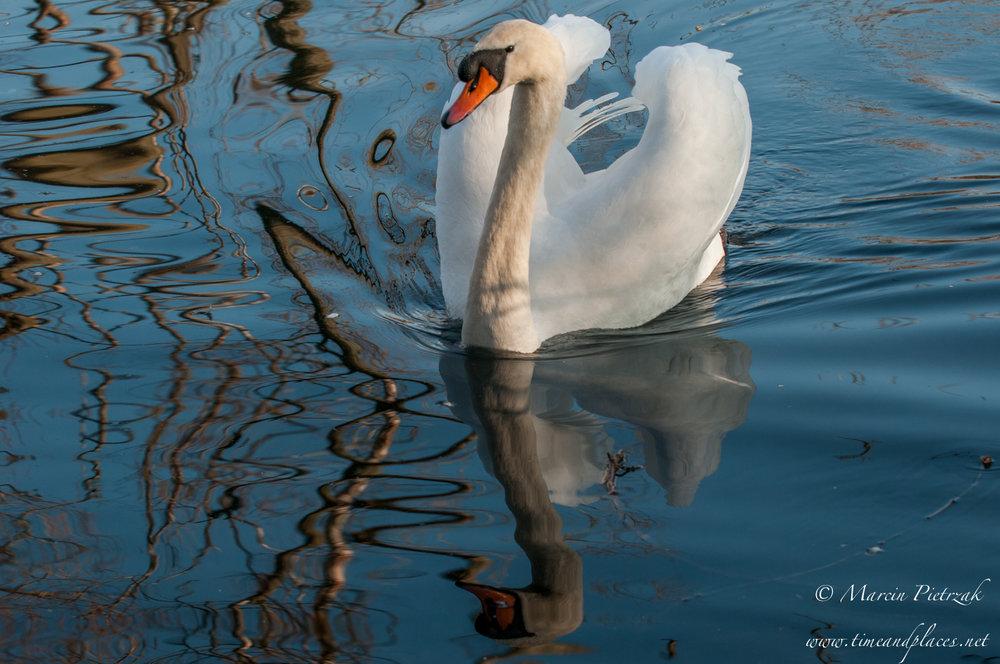 netPtaki Lochend Park - 2019 - MAR_4274.jpg