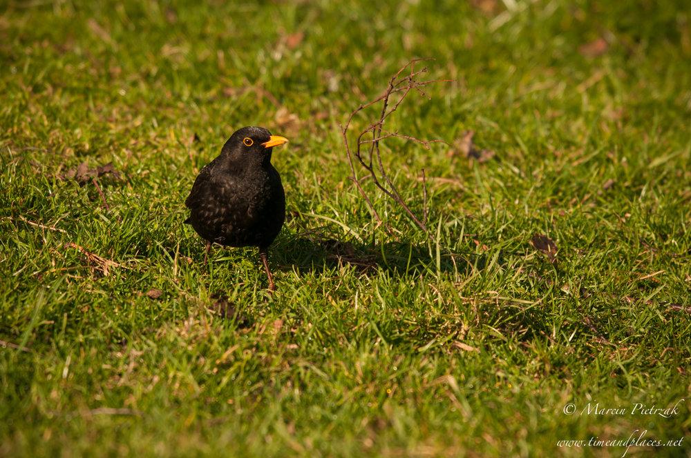 netPtaki Lochend Park - 2019 - MAR_4318.jpg