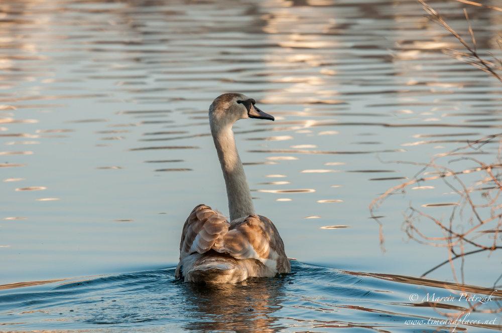 netPtaki Lochend Park - 2019 - MAR_4261.jpg