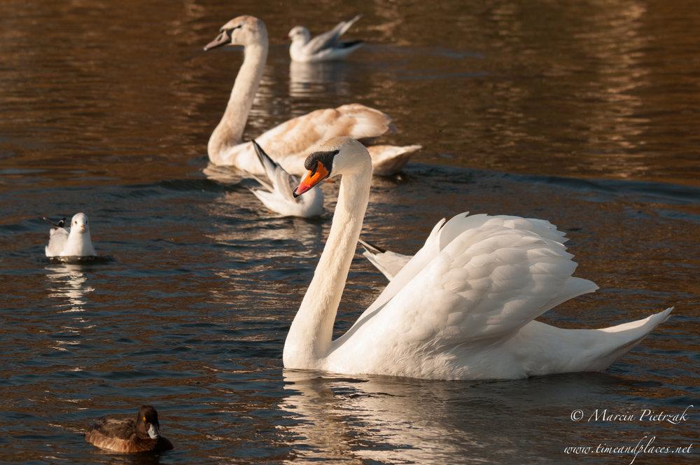 netPtaki Lochend Park - 2019 - MAR_4387.jpg