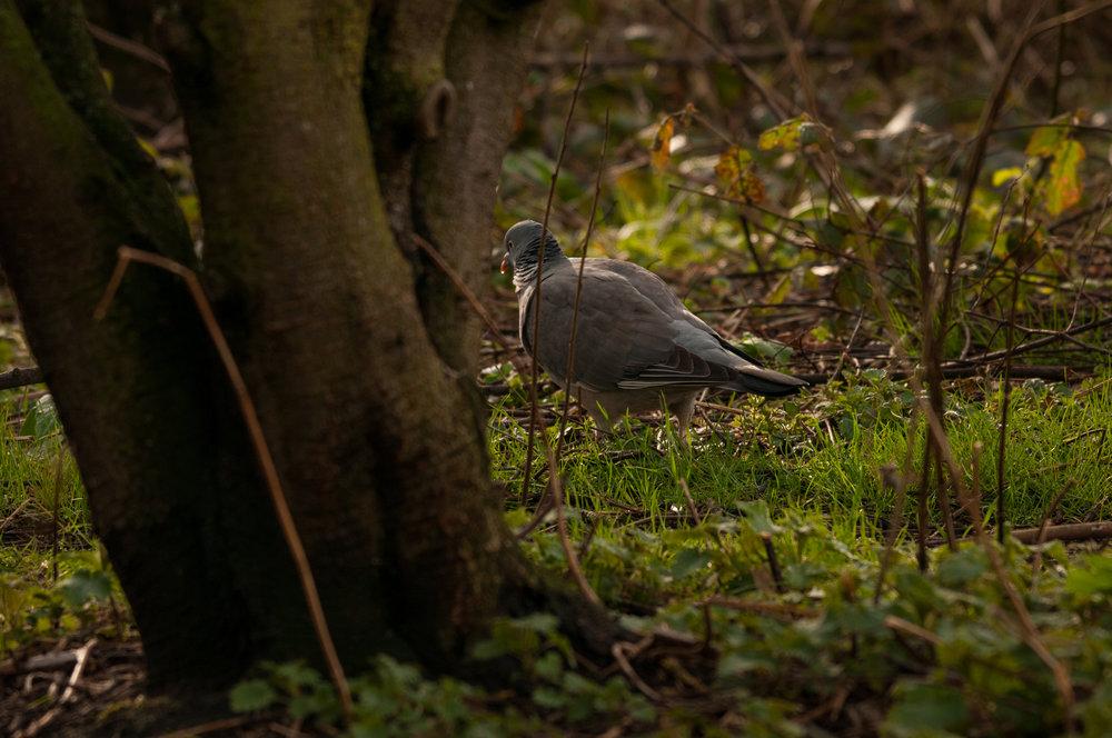 Ptaki Lochend - 2019 - MAR_4523.jpg