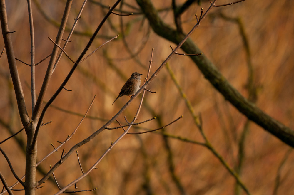 Ptaki Lochend - 2019 - MAR_4560.jpg