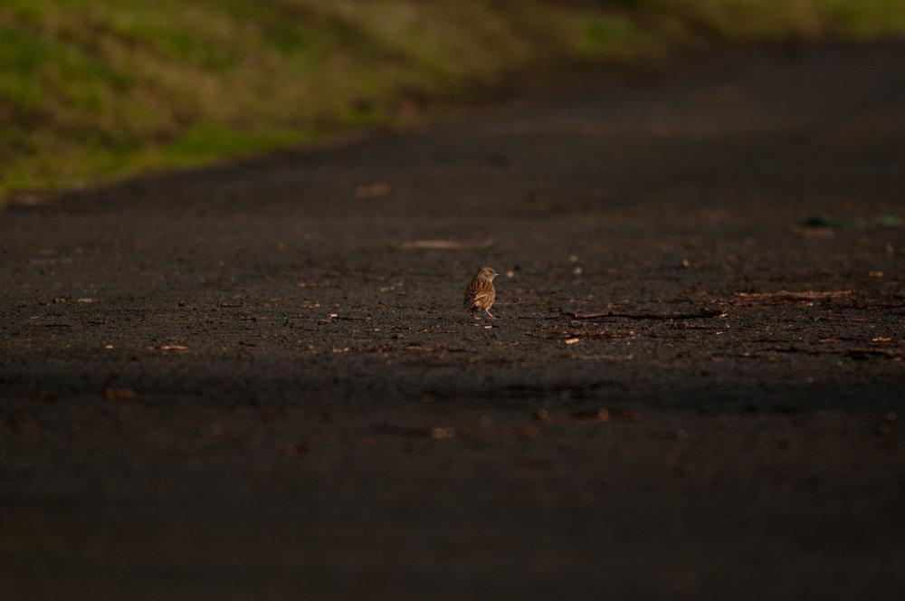 Ptaki Lochend - 2019 - MAR_4570.jpg