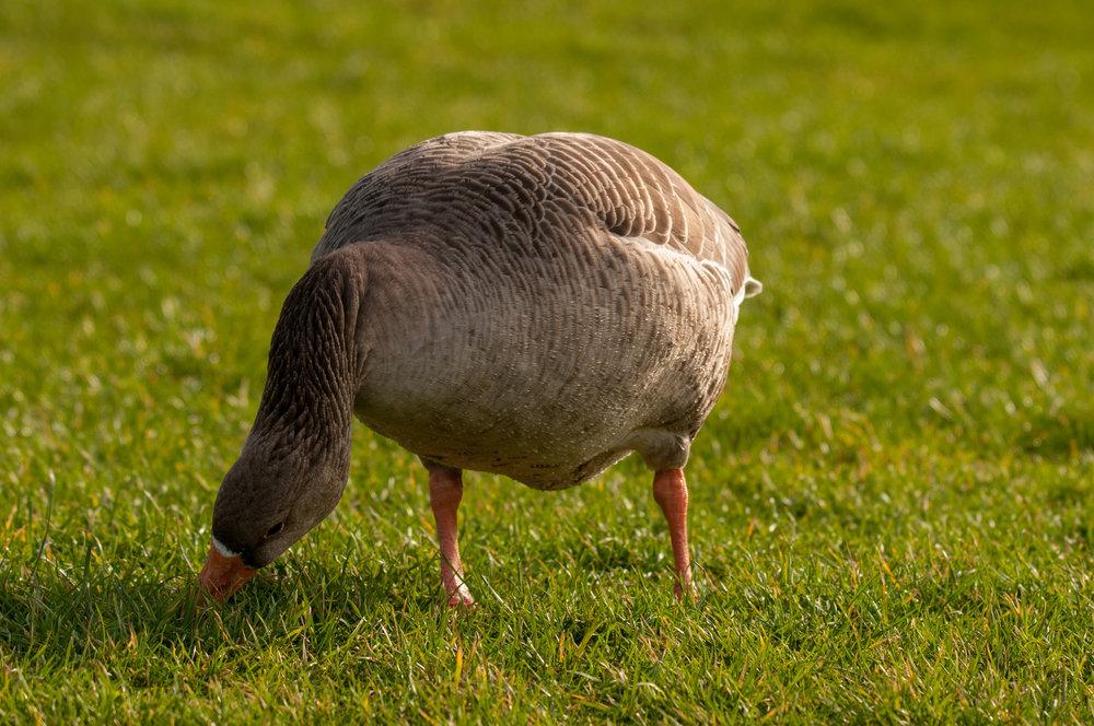 Ptaki Lochend - 2019 - MAR_4658.jpg