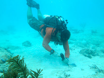 A Miami scientist  working to save corals  from the dredging project.