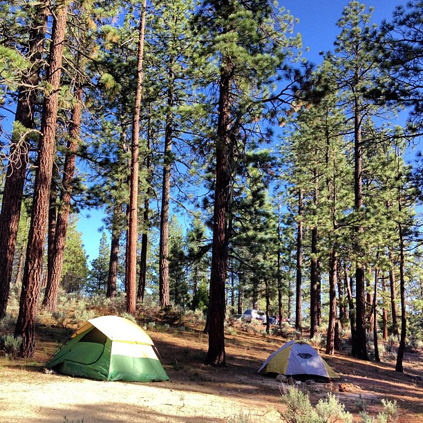 Home in the woods. Horse Flats campground: Angeles Nat'l Forest.