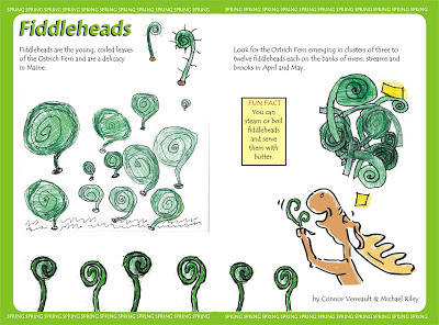 Fiddleheads.jpg